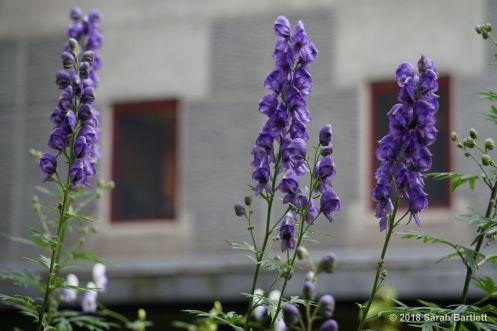 Flowers from Alyeska Resort.